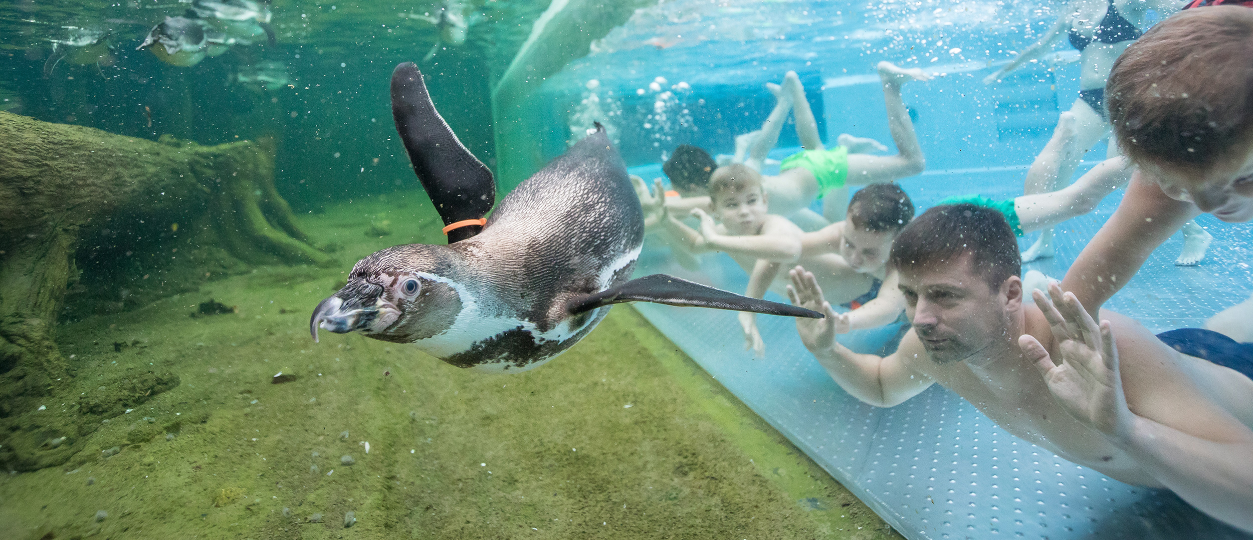 Swim with penguins in Spreewald